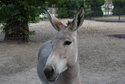 warschau-zoo-esel
